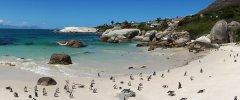 Kapstadt - Die Pinguinkolonie von Bolders Beach - Simons Town