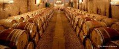 Kap Weinland - Hier lagern hervorragende Weiß- und Rotweine in Eichenfässern